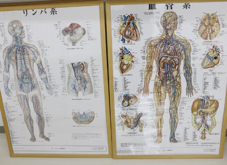 解剖生理学